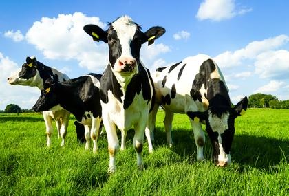 Agrarwissenschaften Studieren